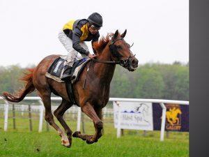 gallop-1117183_640