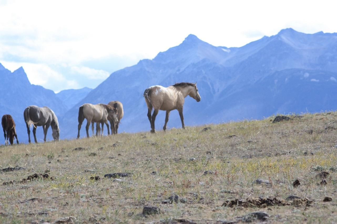 Equine Coach in Nemiah Valley